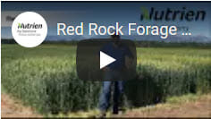 Red Rock Forage